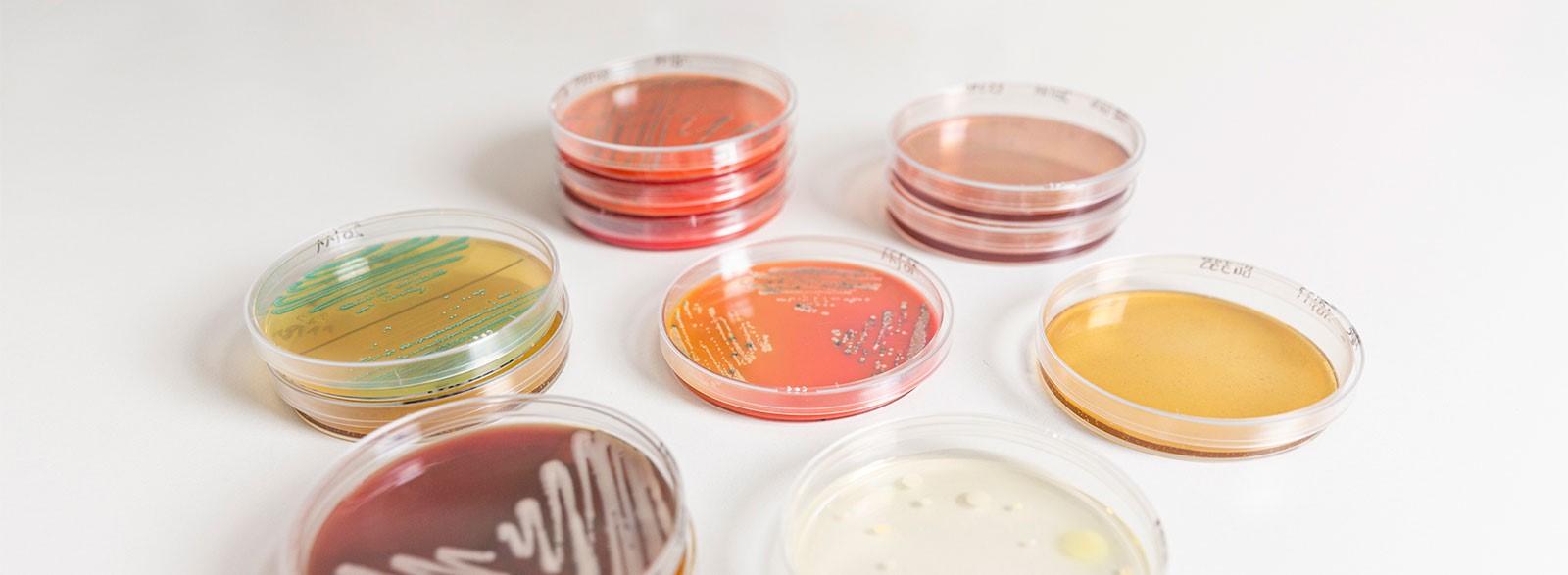 Microbiologia Tentamus Agriparadigma